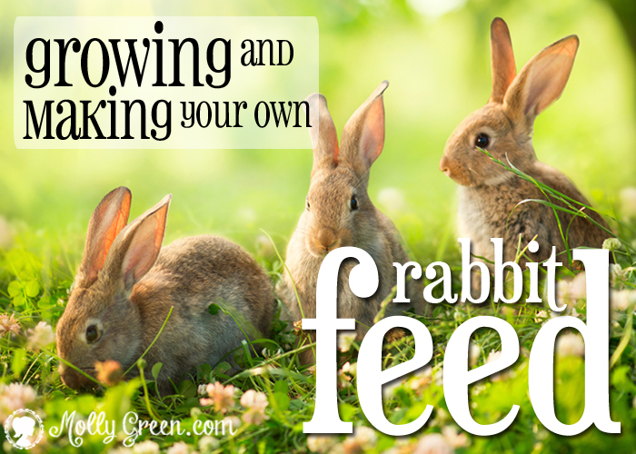 Feeding Rabbits Natural Rabbit Food