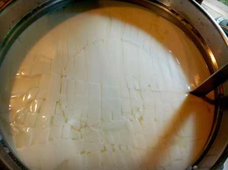 cutting cheese curds which have set from rennet and cheese cultures