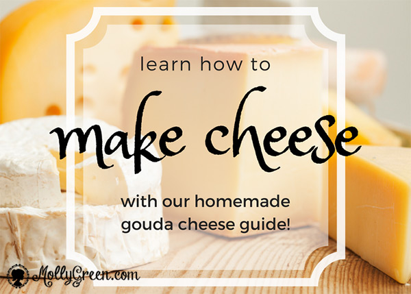 Learn how to make cheese with our homemade gouda cheese guide - mollygreen.com