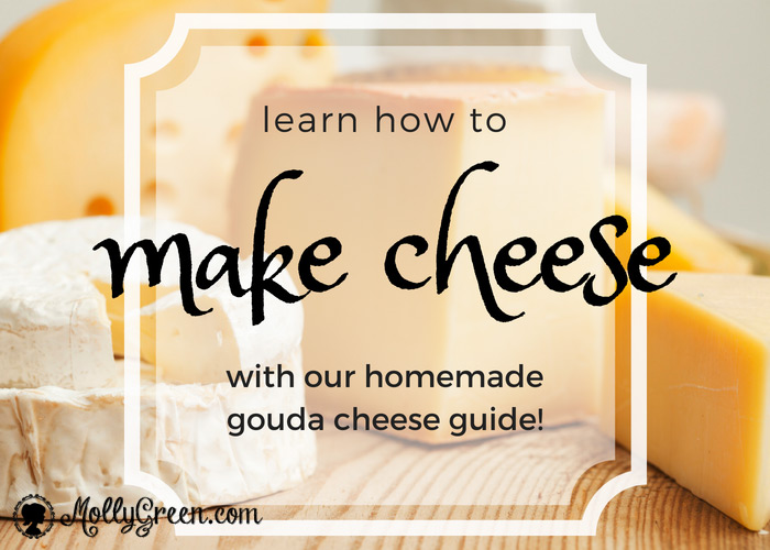 Learn how to make cheese with our homemade gouda cheese guide